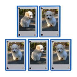 5x Clear/Blue Fridge Magnetic Frame 6x9cm-Fuji Mini 9 8 8+ 7